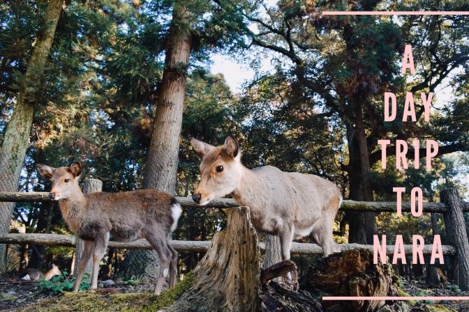 Osaka-Kyoto Day 6: A Side Trip to the City of Nara